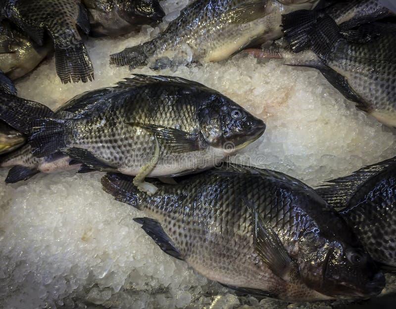 Ny Tilapia på is i asiatisk marknad arkivbild