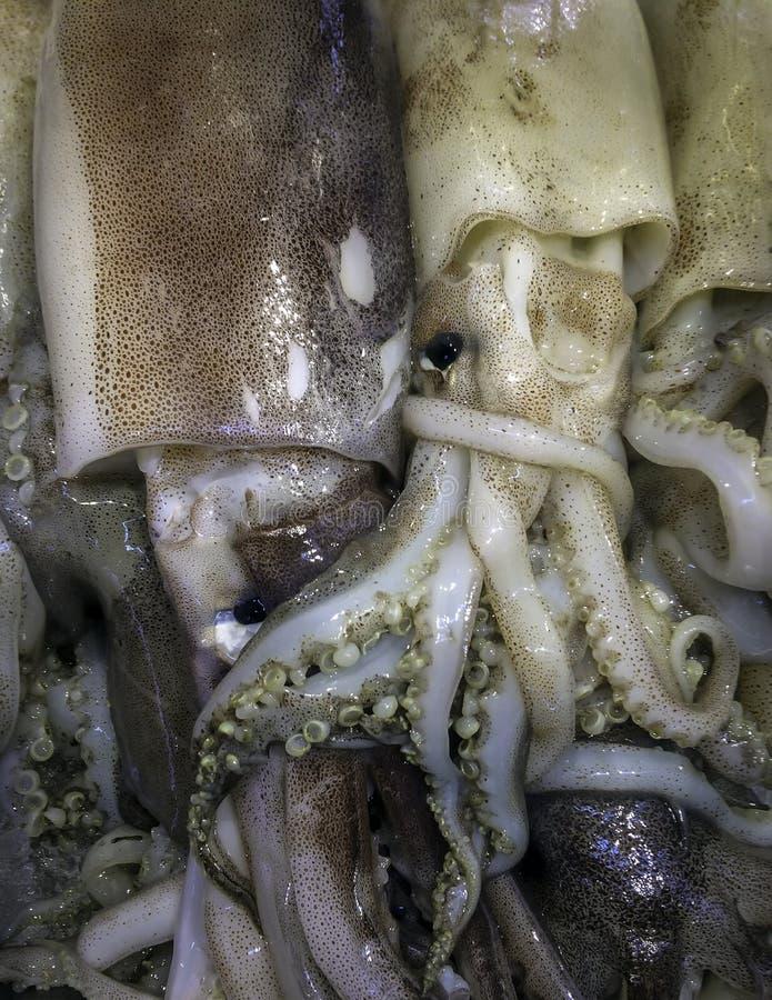 Ny tioarmad bläckfisk på is i asiatisk marknad royaltyfria bilder
