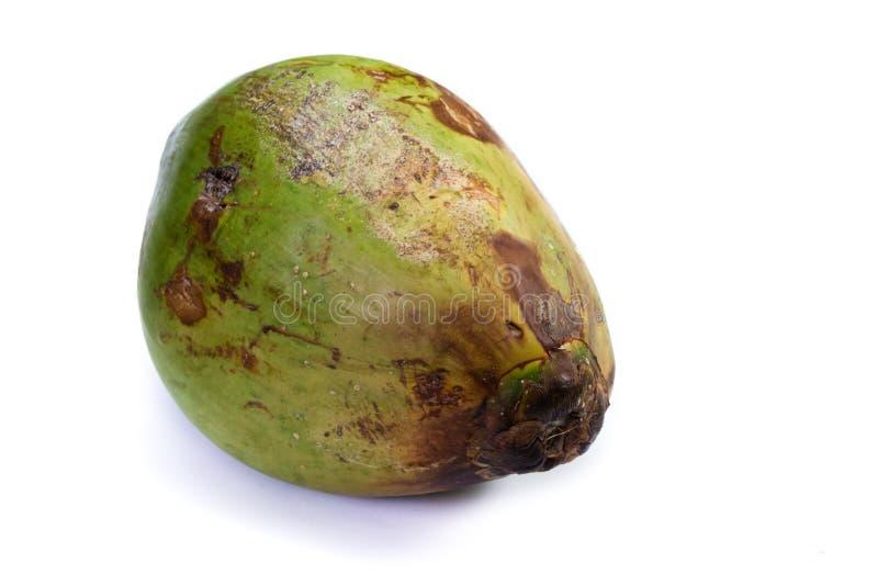 ny ung kokosnöt arkivfoton