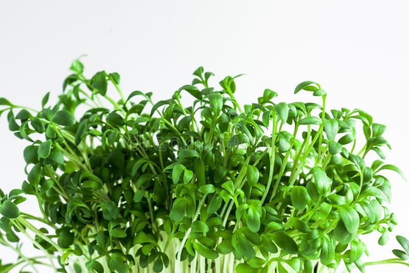 Ny utloppsröreco för grön växt royaltyfri fotografi