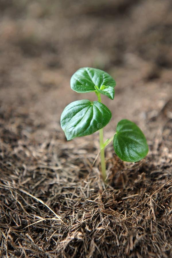 Download Ny växt arkivfoto. Bild av väx, jordning, seed, livstid - 19786132