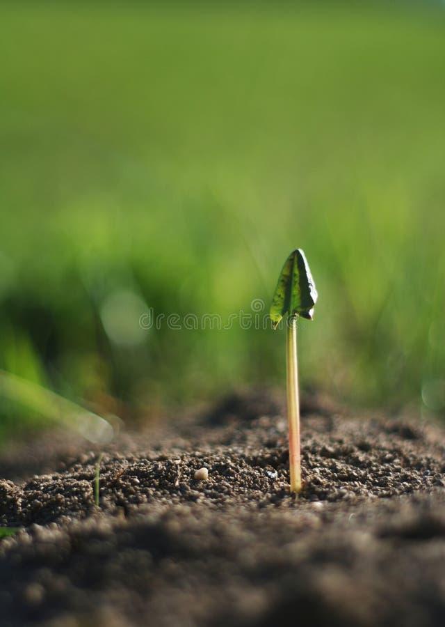 ny växt