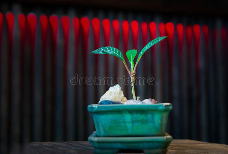 Ny växt i en grön kruka arkivbilder