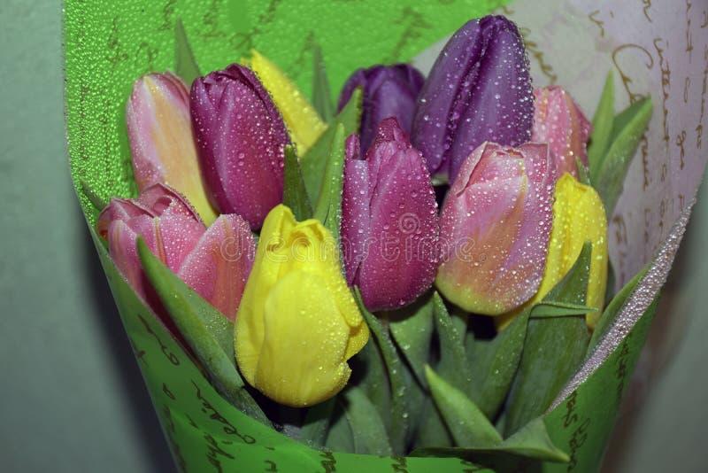 Ny vårbukett av tulpan med daggdroppar Rosa färger gula tulpan med daggsmå droppar royaltyfria foton