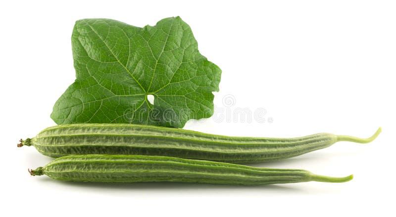 Ny vinkelkalebass - grönsak med bladet på vit royaltyfri foto