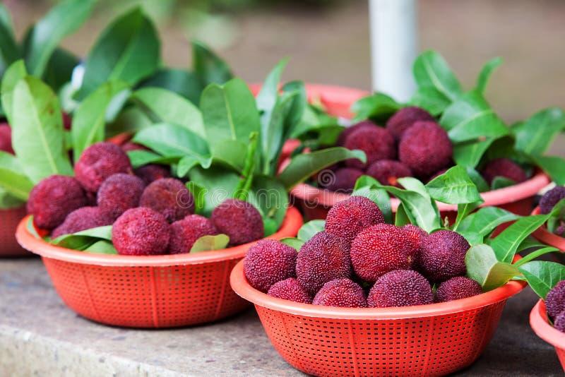 Ny waxberry i korgen arkivbilder