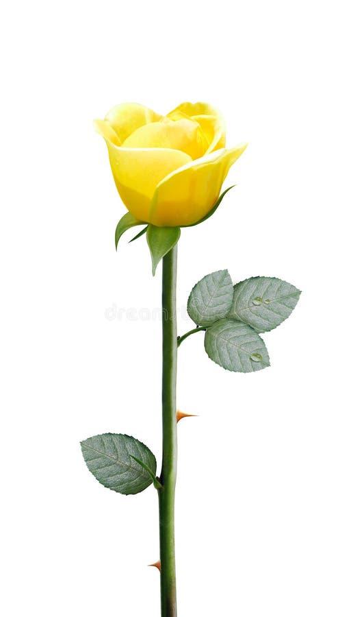 ny yellow för blomma arkivbild
