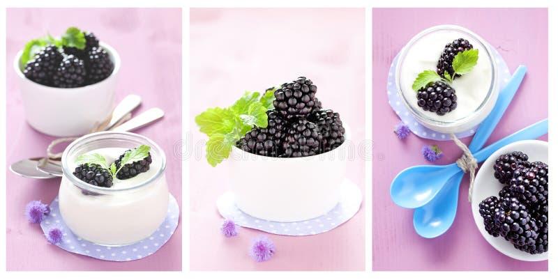 Ny yoghurt royaltyfria bilder