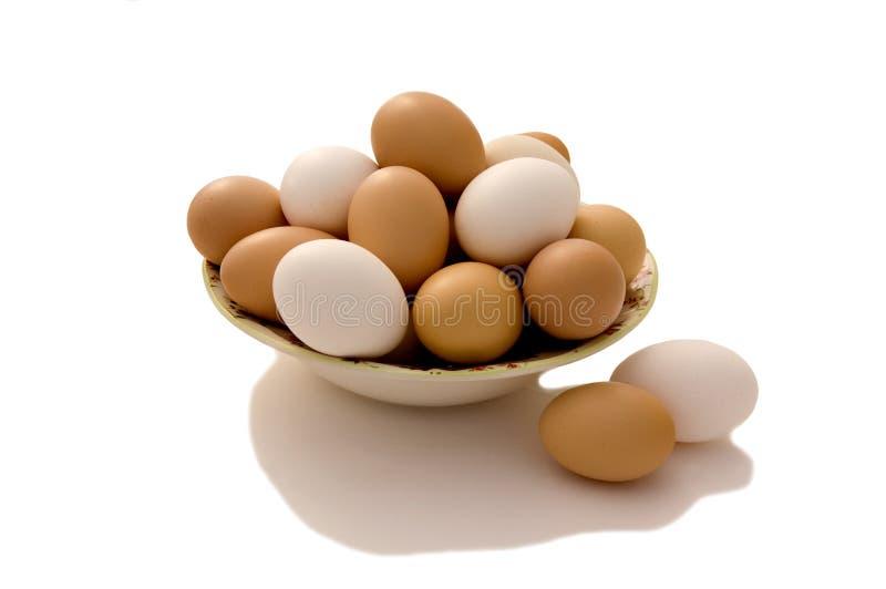 nya ägg arkivbilder