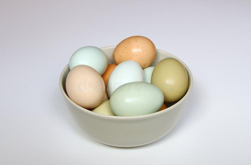 Nya ägg för lokal lantgård i en bunke arkivbild