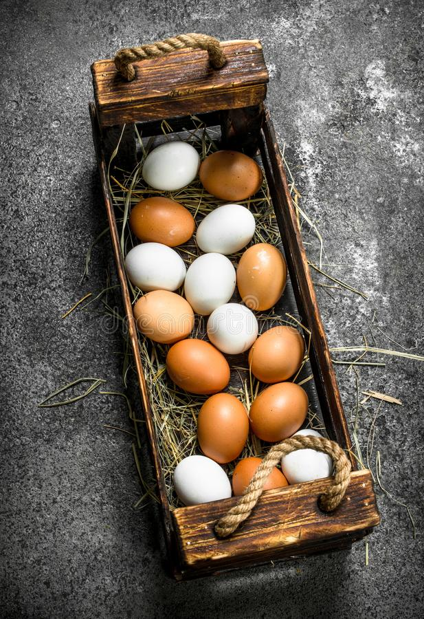 Nya ägg i en gammal ask royaltyfria bilder