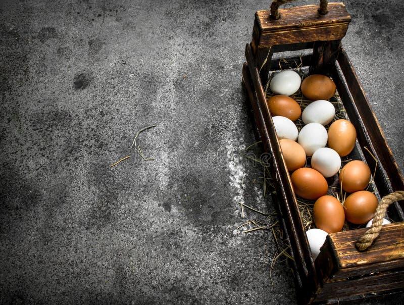 Nya ägg i en gammal ask arkivbild