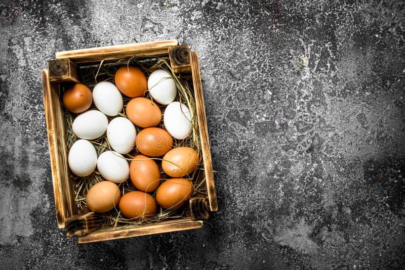 Nya ägg i en gammal ask royaltyfri fotografi