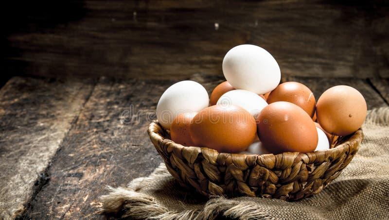 nya ägg i en korg arkivbild