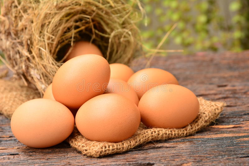 Nya ägg med fågeln bygga bo den pålagda säcken på trä royaltyfri fotografi