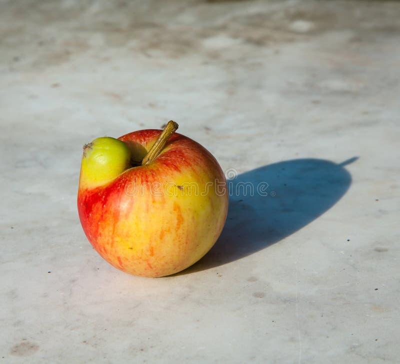 Nya äpplen med deformeringar fotografering för bildbyråer