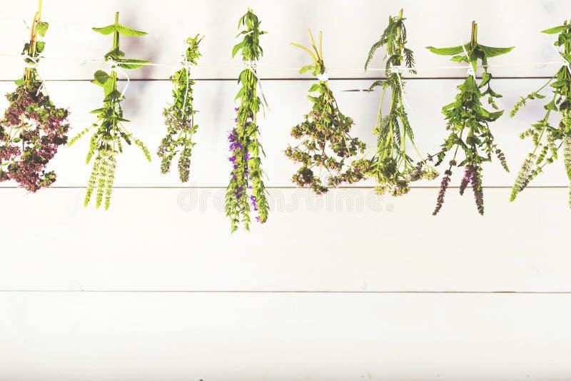 Nya örter som isoleras på vit träbakgrund Kök medicinska örter, mintkaramell, timjan, hyssop, oregano arkivfoto