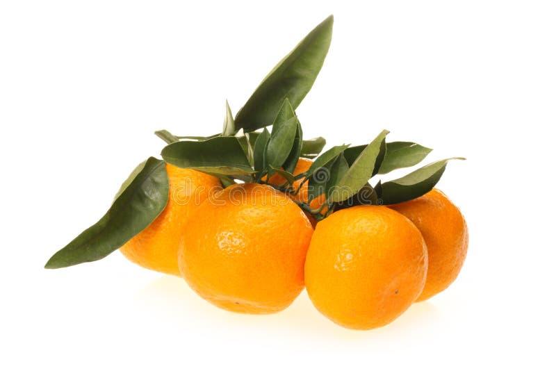 nya apelsiner arkivbild
