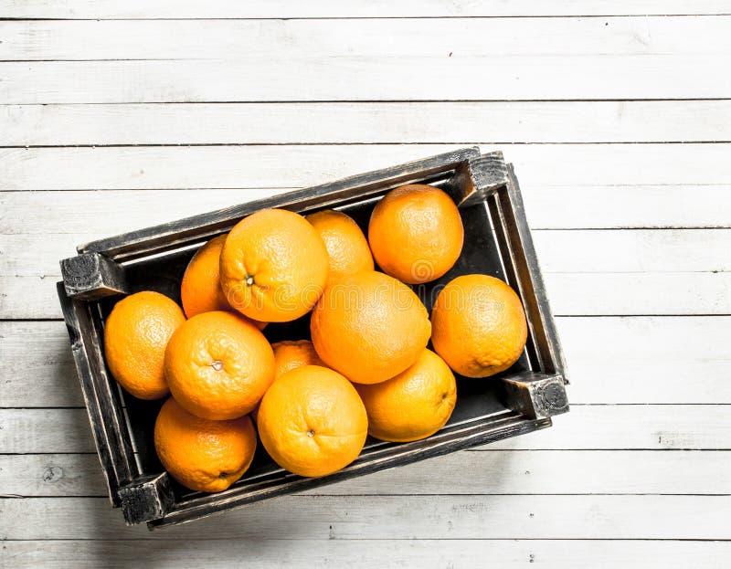 Nya apelsiner i en ask royaltyfri foto