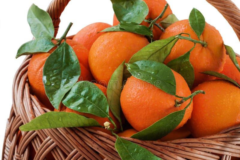 Nya apelsiner i korgen med sidor royaltyfria bilder