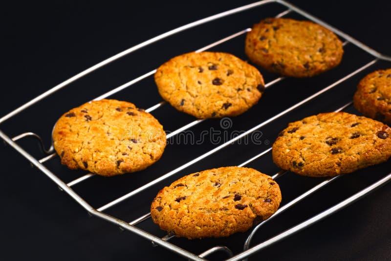 Nya bakade kakor för chokladchip och hasselnöt arkivfoto