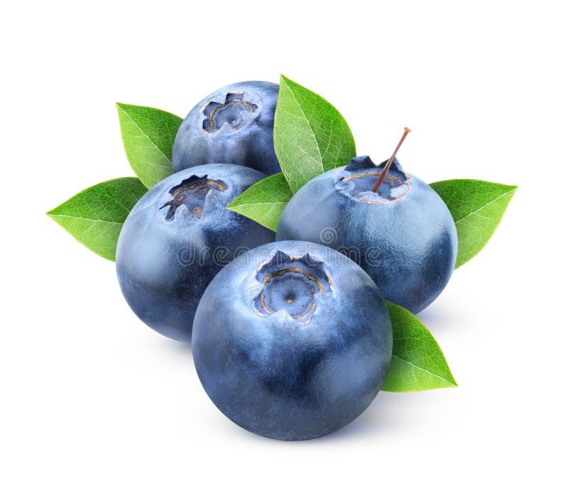 Nya blåbär arkivfoto