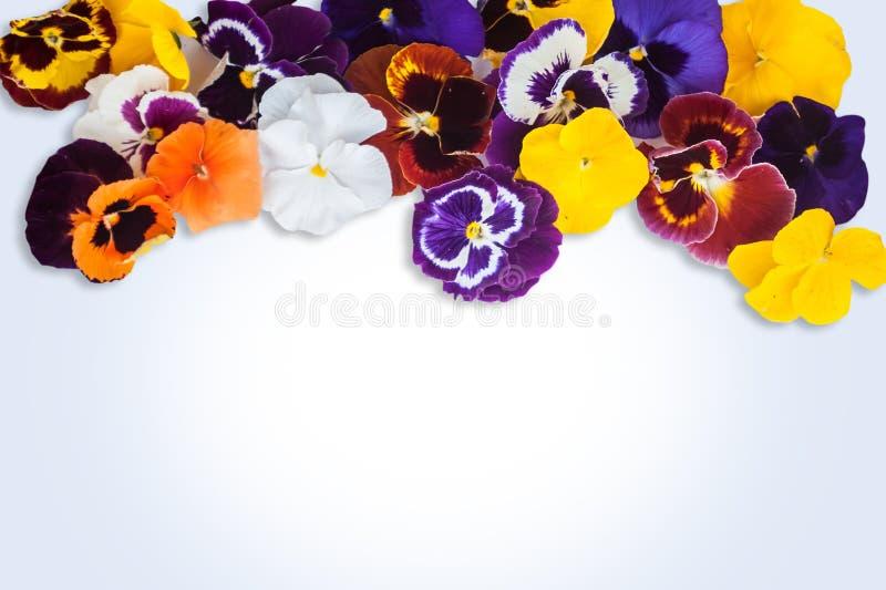 Nya blommor och ställe för din text royaltyfria bilder