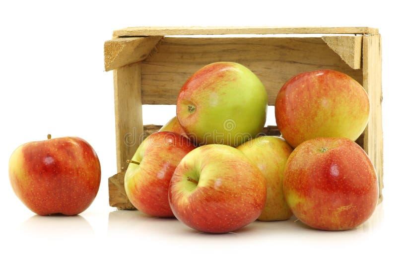 Nya Braeburn äpplen royaltyfria bilder