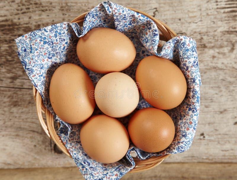 nya bruna ägg arkivbilder