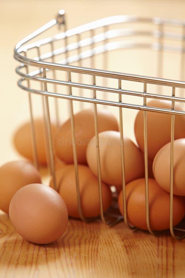 nya bruna ägg royaltyfri foto