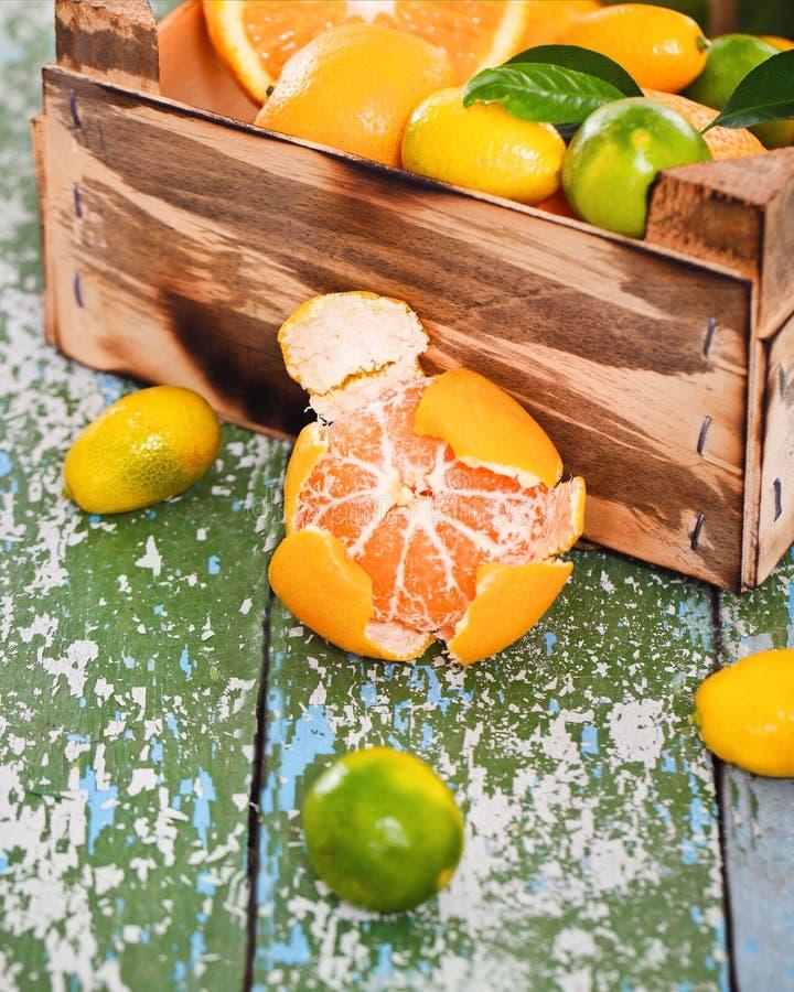 Nya citrusfrukter royaltyfri fotografi