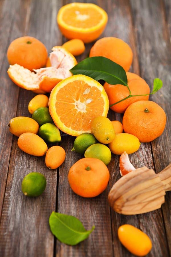 Nya citrusfrukter fotografering för bildbyråer