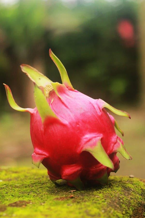 Nya drakefrukter arkivbilder