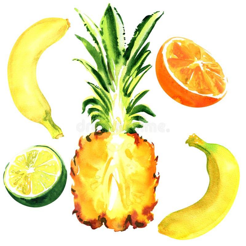 Nya exotiska frukter, banan, ananas, apelsin, limefrukt, tropisk saftig frukt, sund mat som isoleras, dragen hand arkivbilder