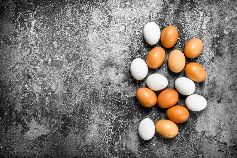 nya fega ägg arkivfoto