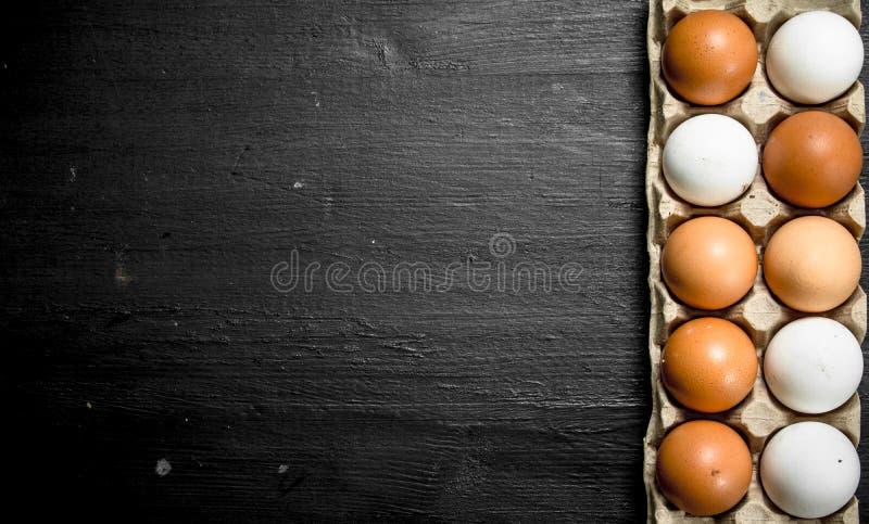 Nya fega ägg i en kassett royaltyfri bild