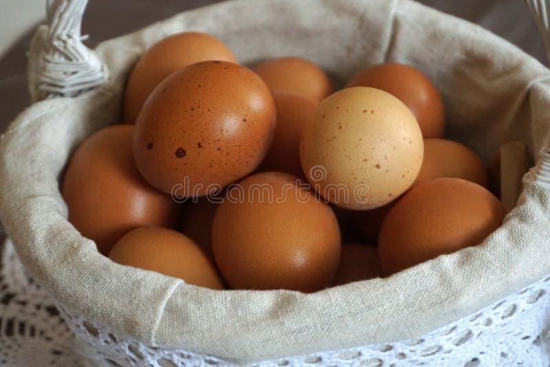 Nya fega ägg i korgen, slut upp royaltyfri fotografi