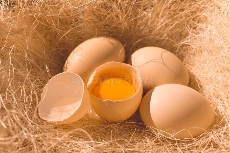 Nya fega ägg på bakgrunden av naturligt hö Organisk mat royaltyfri foto