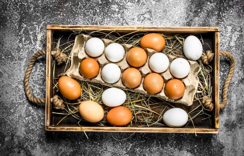 Nya fega ägg på ett gammalt magasin arkivbilder