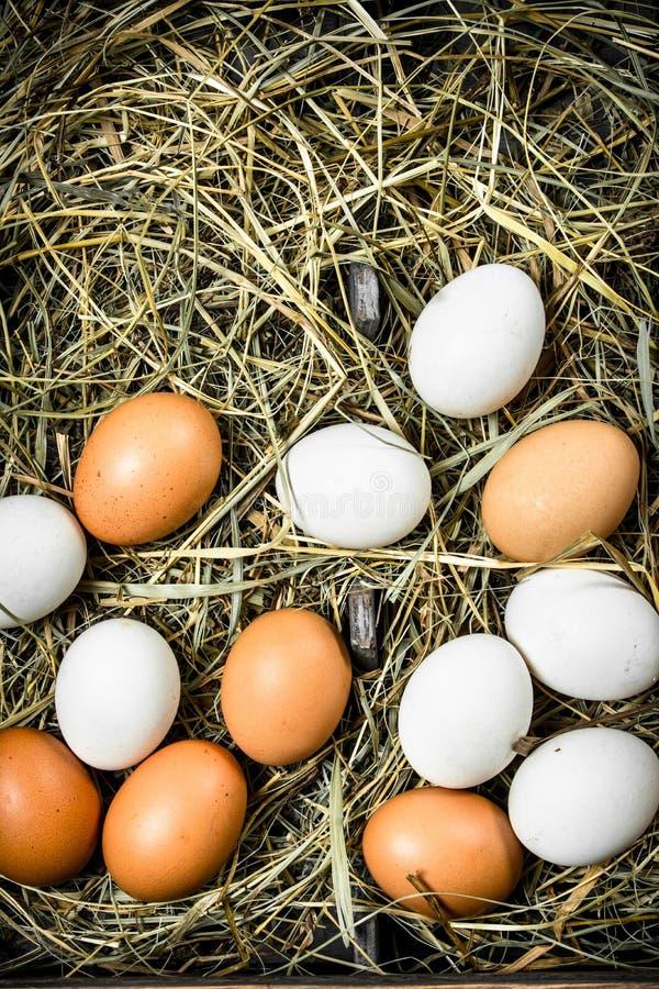 Nya fega ägg på ett gammalt magasin royaltyfri foto