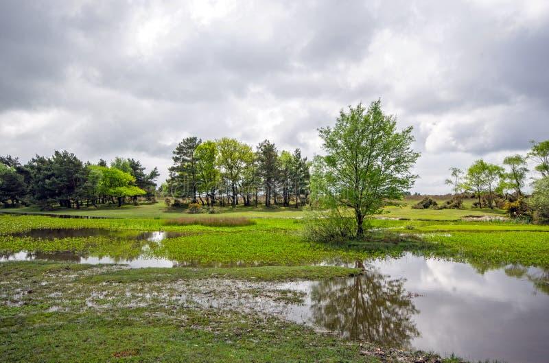 Nya Forest Pond royaltyfri fotografi