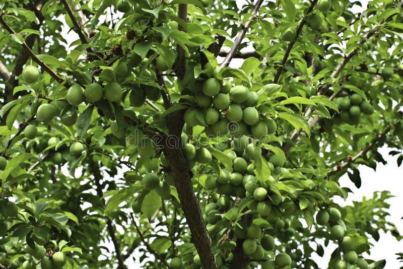 Nya frukter på morgontid, regnig säsong arkivfoto