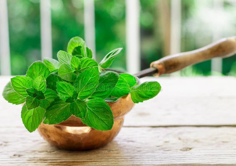 Nya gröna organiska kvistar av mintkaramellen pepparmint Kryddiga ?rtar smaktillsats arkivfoto