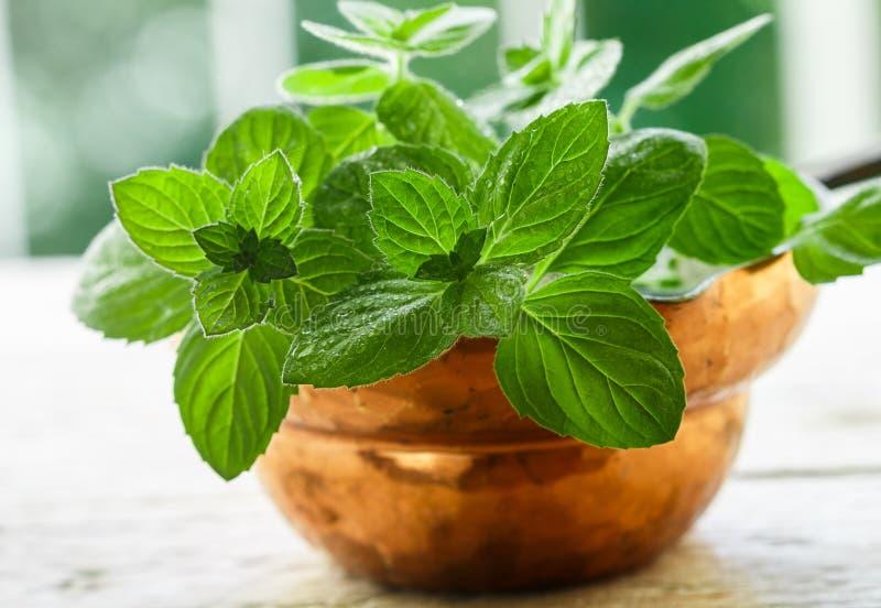 Nya gröna organiska kvistar av mintkaramellen pepparmint royaltyfria bilder