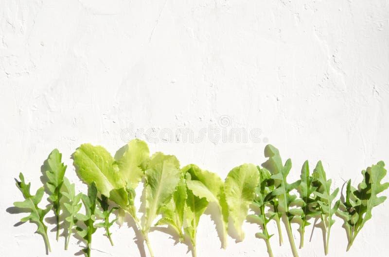 Nya gröna organiska växter, sidor för sallad Raden av sunda ingredienser för att laga mat bantar mål arkivfoton