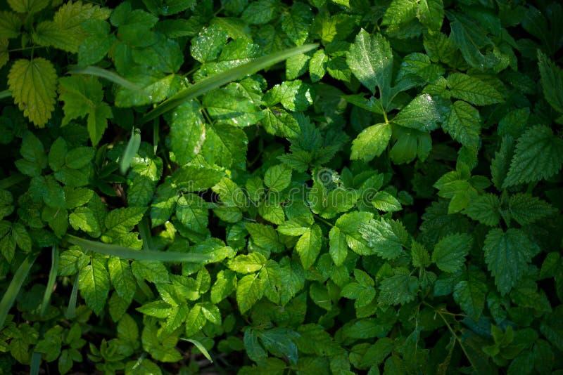 Nya gröna sidor av växter Textur för skognaturbakgrund royaltyfri foto