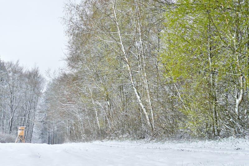Nya gröna sidor på skogträd i ett snölandskap i vår arkivbild