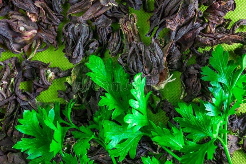 Nya gröna sidor på torkade herbals Naturlig organisk bakgrund Begrepp av gammalt och ungt eller friskhet och staleness royaltyfria foton