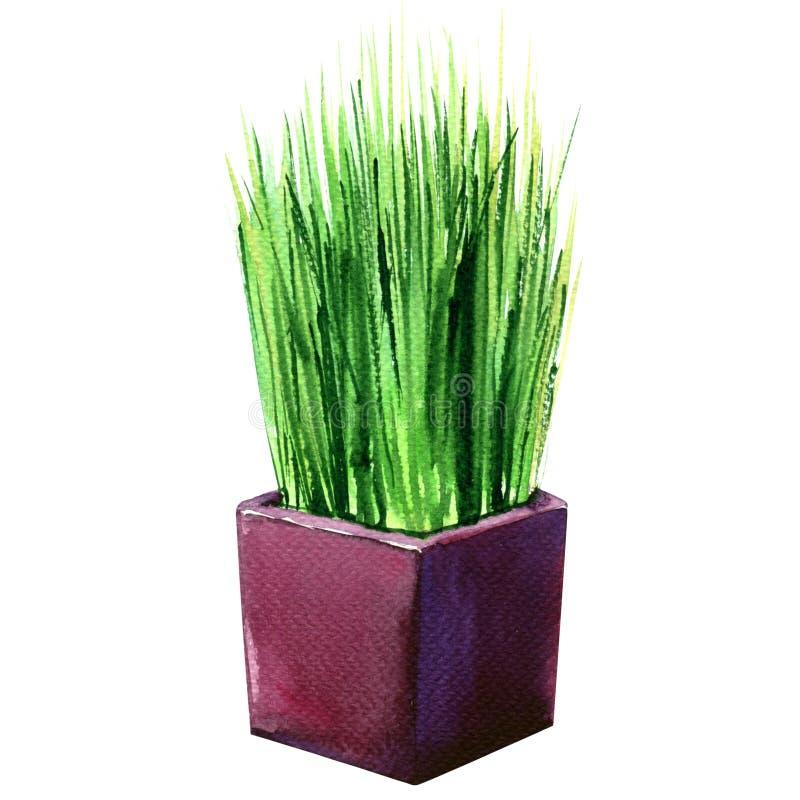 Nya gröna wheatgrass, gräs i den isolerade blomkrukan, vattenfärgillustration royaltyfria foton