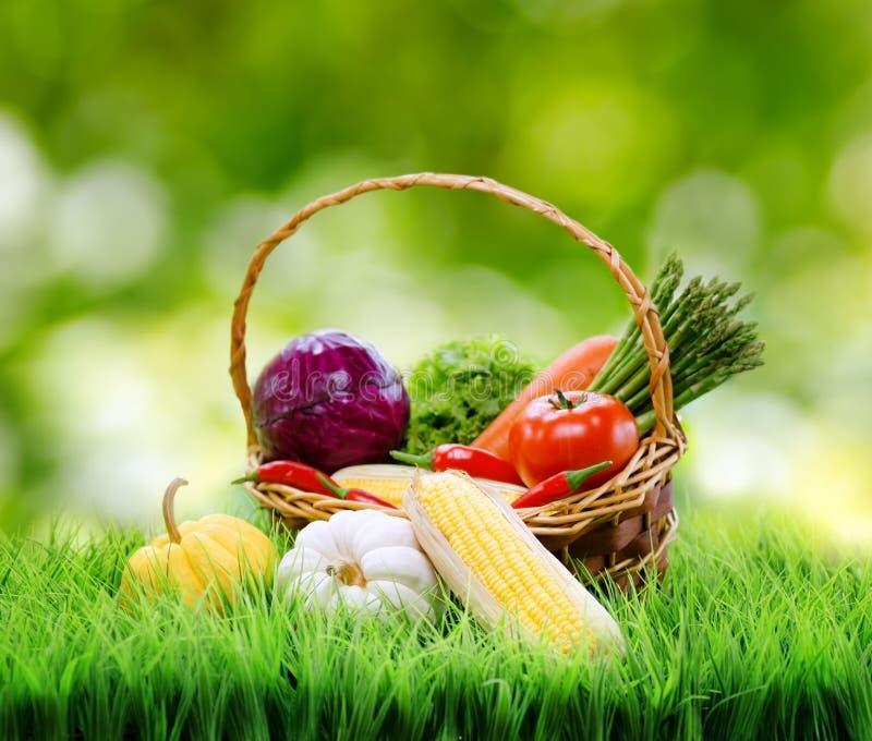 Nya grönsaker i korgen på grönt gräs royaltyfri foto